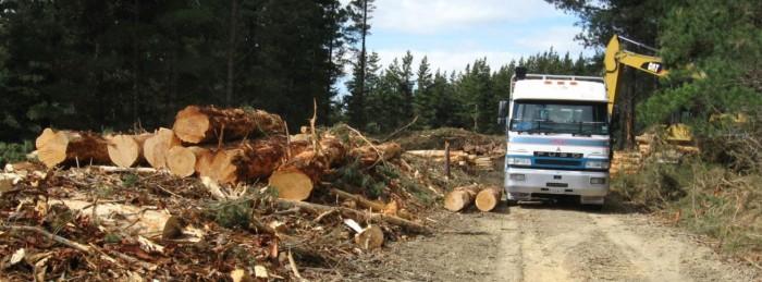 log-surge-pile